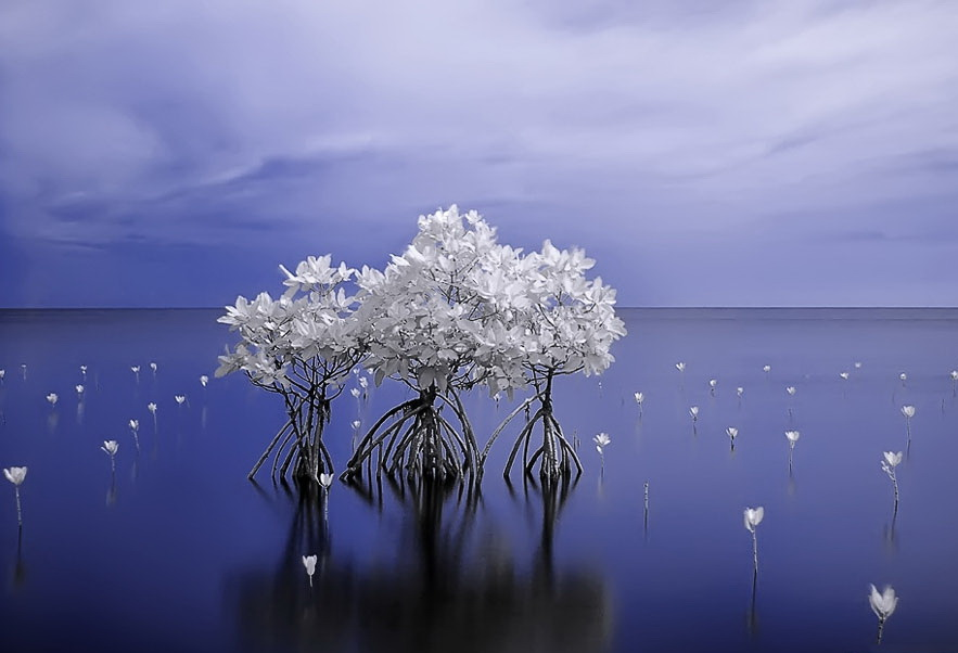 Инфракрасная фотография - пример фото